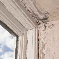 How to Prevent Wood Rot and Decay in Your Richmond Home