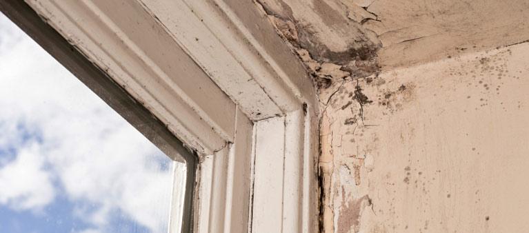 Wood Rot Repair | Richmond, Virginia
